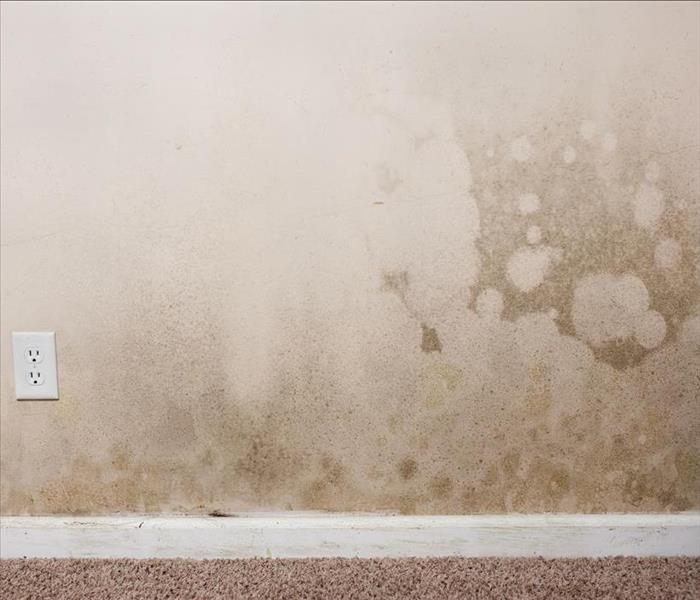 Mold Remediation Mold Damage Remediation For Your Bakersfield Area Home