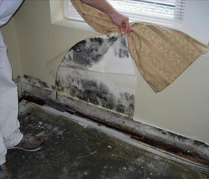 Mold Remediation Some Facts About Black Mold